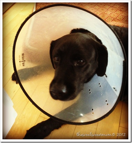 coneofshame
